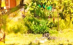 塑料摇摆和吊床在庭院里 库存照片