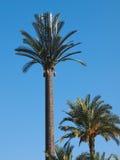 塑料棕榈树 库存图片