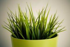 塑料植物 免版税库存照片