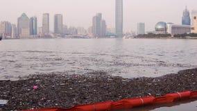 塑料瓶、木芯片和其他垃圾浮游物在黄浦江的银行附近在上海 影视素材