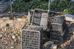 塑料盒被安置在草莓领域边缘 免版税库存照片