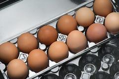 塑料纸盒新鲜的有机棕色自由放养的鸡蛋 免版税库存图片