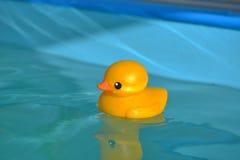 塑料鸭子 免版税库存图片