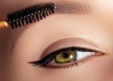 塑造应用眼影膏、染睫毛油在眼皮,睫毛和眼眉的妇女使用构成刷子 专业化妆师 免版税库存图片