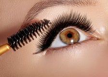 塑造应用眼影膏、染睫毛油在眼皮,睫毛和眼眉的妇女使用构成刷子 专业化妆师 免版税库存照片