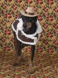 塑造他的逗人喜爱的德国短毛猎犬秋天成套装备 图库摄影