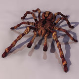 塔兰图拉毒蛛 向量例证