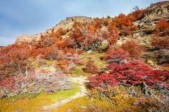 巴塔哥尼亚的金黄森林 图库摄影