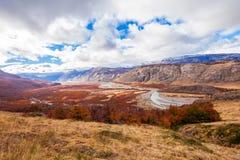 巴塔哥尼亚的金黄森林 免版税库存照片