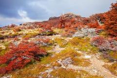 巴塔哥尼亚的金黄森林 库存图片