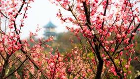 塔在李子庭院里 库存照片
