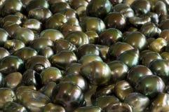 塔希提岛黑巴洛克式的珍珠- 80 bis 免版税库存照片