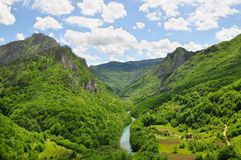 塔拉河的峡谷:未触动过的自然一片罕见的绿洲  库存图片