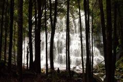 塔斯马尼亚岛瀑布 免版税库存照片