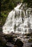 塔斯马尼亚岛瀑布 免版税库存图片