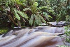 塔斯马尼亚岛纳尔逊瀑布小河 免版税库存照片