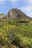 塔斯马尼亚岛,摇篮山NP,澳大利亚 免版税图库摄影