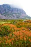 塔斯马尼亚的原野 库存照片