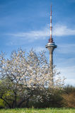 塔林市,爱沙尼亚电视塔  免版税库存图片