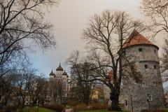 塔林,爱沙尼亚:济科在de科克Museum和在中世纪塔林防御市墙壁的本营隧道 观点的亚历山大・涅夫斯基 图库摄影