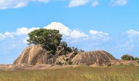 塞伦盖蒂全景  在石头的树 坦桑尼亚,非洲 库存图片