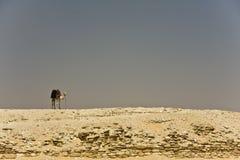 塞加拉 免版税库存照片