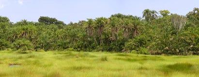 塞姆利基国家公园,乌干达 图库摄影