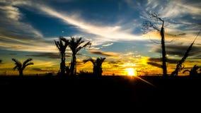 塞尼亚岛 免版税图库摄影