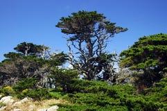 塞浦路斯国王 图库摄影