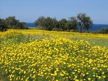 塞浦路斯春天 免版税库存图片