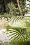 塞浦路斯/旅行/自然/利马索尔/绿色/ 免版税库存照片