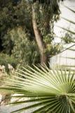 塞浦路斯/旅行/自然/利马索尔/绿色/ 库存图片