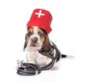 贝塞猎狗小狗佩带的护士医疗帽子和听诊器 查出在白色 库存图片