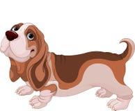 贝塞猎狗 免版税库存图片