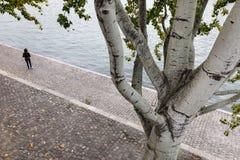 塞纳河堤防在巴黎 免版税库存图片