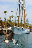 巴塞罗那口岸和海鸥 图库摄影