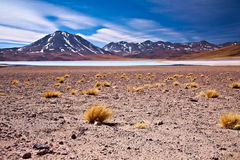 塞罗-巴尔接近的盐水湖miscanti 库存图片
