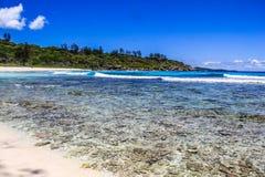 塞舌尔群岛拉迪格岛Anse椰树海滩 库存图片