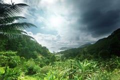 塞舌尔群岛海岛密林  免版税库存图片