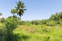 塞舌尔群岛海岛的, La Digue香草种植园 免版税库存图片