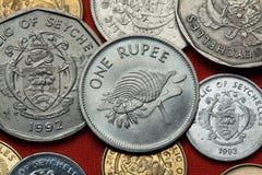 塞舌尔群岛的硬币 氚核喇叭Charonia tritonis 免版税库存图片