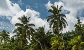 塞舌尔群岛 豪华植被 免版税库存图片