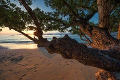 塞舌尔群岛 库存照片