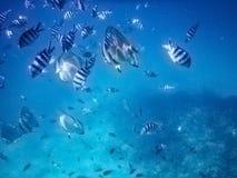 塞舌尔群岛Ile椰树水下的鱼学校 图库摄影