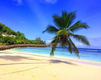 塞舌尔,在海滩的棕榈树 免版税图库摄影