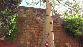 塞维利亚,安达卢西亚,西班牙- 2016年4月18日:城堡、室内花园、庭院和房间 影视素材