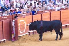 塞维利亚- 5月16 :西班牙斗牛士执行一头斗牛在Th 库存图片