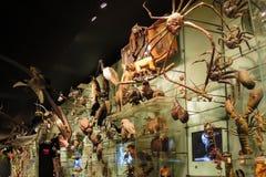 填充动物玩偶的汇集从不同的起源的在博物馆 免版税图库摄影