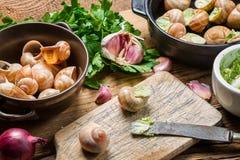 填装的蜗牛用大蒜黄油和新鲜的草本 免版税图库摄影