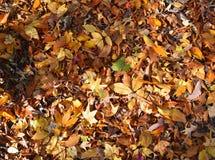 填装背景的五颜六色的秋叶 免版税库存照片